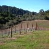 Seaver Vineyards on my first visit in the winter of 2006