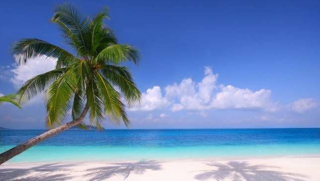 palm-tree-intro.jpg.653x0_q80_crop-smart