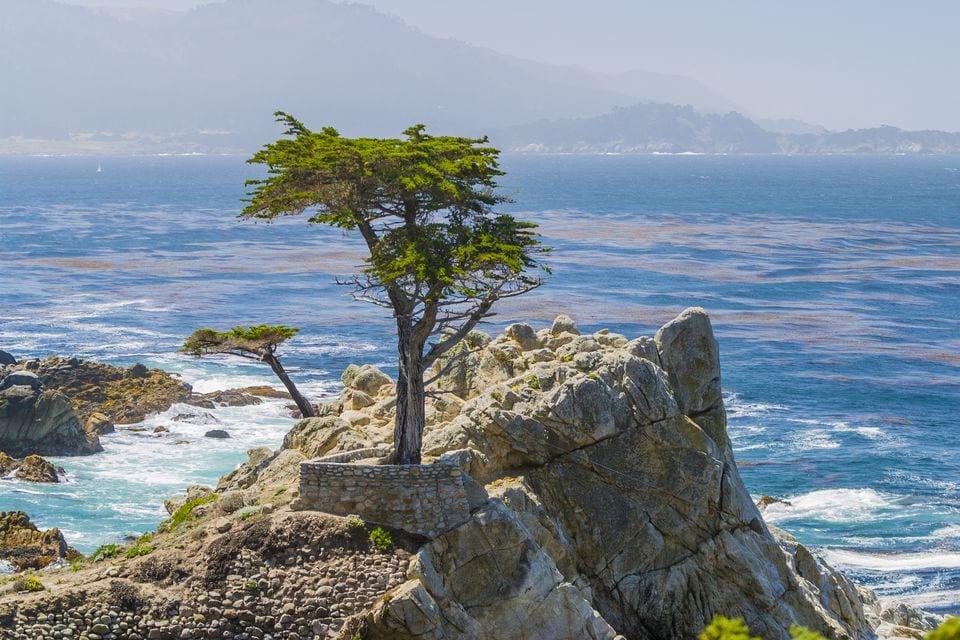 lone-cypress-pebble-beach-ca-168577138-578eba653df78c09e989a81e